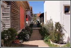 Village ostricole de l'herbe (Les photos de LN) Tags: ruelle bois cabane volets bassindarcachon pcheurs lherbe aquitaine impasse villageostricole