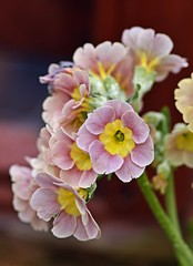 Spring 2016 - 876 LBG (Lostash) Tags: life flowers plants nature spring flora seasons leicesterbotanicalgardens
