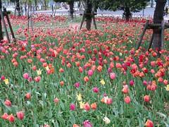 IMG_3459 (NIKKI BRITTAIN) Tags: city travel flowers anime color art nature japan ads subway photography japanese tokyo miniatures couple tulips odaiba gundam rtw roundtheworld