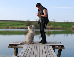 2DSC_8707 (tj_hinako) Tags: dog malamute