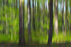 Spring - Explored (moments in nature by Antje Schultner) Tags: grn wald beech abstrakt frhling buche textur enzkreis explored wischer