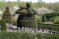 Ladew Topiary Gardens ~ HTMT! (karma (Karen)) Tags: flowers trees gardens topiary tulips maryland monkton dogwoods ladewtopiarygardens 4spring nrhp htmt cmwdgreen harfordco