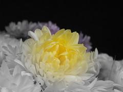 Fantasiblomma/ Fantasy Flower (Klas-Goran Photo) Tags: fantasyflower