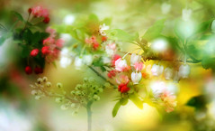 Captured in the spring. (augustynbatko) Tags: flowers trees macro nature spring branches