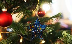 Stern (<Leonie di Vienna>) Tags: christmas xmas weihnachten star grow olympus stern blhen wachsen