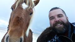 #Horsie (Toni Kaarttinen) Tags: november winter boy horses horse holiday man guy beard island iceland islandia adventure experience islande izland islanda islndia ijsland icelandichorses islanti islando islndia   icelandichorsse