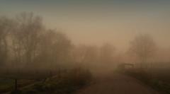 hour of dreams (buckethead777) Tags: trees looms foggyroad