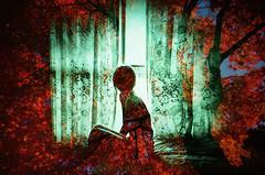 -room of reminiscent (Hodaka Yamamoto) Tags: autumn tree fall film silhouette maple lomo lomography doubleexposure room curtain double lomolca multipleexposure negative filmcamera doubles multiexposure filmphotography