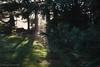 IMG_1937 (hillarycharris) Tags: morning trees mist nature fog sunrise canon landscape outdoors foggy tamron morningmist naturephotography morningfog mistymorning treesinfog foggytrees foggylandscape sunrisephotography treesinmist mistylandscape canonrebelt5 canoneost5