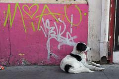 Santiago (Alvaro Lovazzano) Tags: chile patronato santiago cile cili recoleta canon t5i 700d calle street strada perro dog can cane rosado rosa pink pinky graffiti grafiti rayado miau