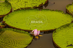 NO_Manaus0418 (Visit Brasil) Tags: travel brazil tourism horizontal brasil amazon rainforest natureza vitriargia manaus norte amazonas detalhe ecoturismo externa semgente diurna riosolimes visitbrasil