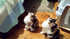 Kira e Rey (Mauro Bettarel) Tags: cats famiglia gatti animali rodi