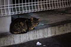 Today's Cat@2016-02-03 (masatsu) Tags: cat pentax osaka cc100 catspotting mx1 thebiggestgroupwithonlycats