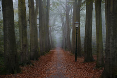 Lonely Autumn Path