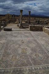 imgp3805 (Mr. Pi) Tags: ruin morocco column volubilis archaeologicalsite