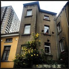 fleurs de #Bruxelles #Belgique #urban #city... (ocyan) Tags: city urban architecture fleurs belgique bruxelles beaut uploaded:by=flickstagram instagram:photo=9910906030371272263374187