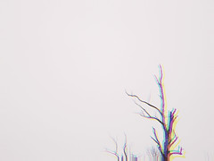 duo (iamlewolf) Tags: blue winter red blackandwhite orange white ny newyork black macro tree green nature yellow closeup grey cool nikon colorful alone close purple branches gray fringe simplicity coolpix trippy wintertime simple westernnewyork wny offcenter fringing nikoncoolpix simplistic l320 polarr nikonl320