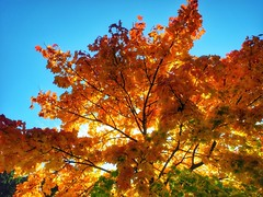 Bume im Idsteiner Land (mheckerle) Tags: autumn trees color tree nature leaves landscape deutschland leaf hessen herbst natur leafs landschaft baum bunt baeume idstein 2015