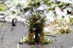 Moss Tower (Piotr Mierzejewski) Tags: moss samsung 11 m42 jupiter nx samsungnx10