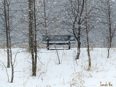 (Sarah-Vie) Tags: hiver neige banc img8112 scnehivernale posiehivernale neigetombante bancsouslaneigetombante