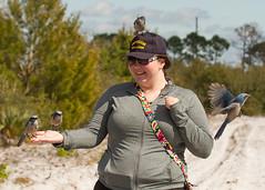 IMG_4054 (Bill Jelen) Tags: hat birding scrubjay rockledge birdonhat