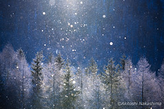 shining diamond dust (nakashy) Tags: trees winter white snow color colour tree nature beautiful japan canon landscape photography eos photo shine 5d rime nagano 70200mm 2016 canoneos5dmarkiii 5dmk3 5d3 5dmark3