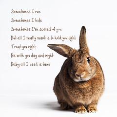 Sometimes (Jeric Santiago) Tags: pet rabbit bunny animal lyrics conejo sometimes lapin hase britneyspears kaninchen   winterrabbit