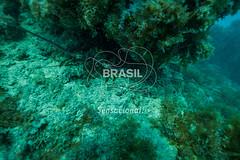NE_Abrolhos0007 (Visit Brasil) Tags: horizontal brasil fauna natureza bahia nordeste detalhe externa abrolhos semgente subaqutica diurna