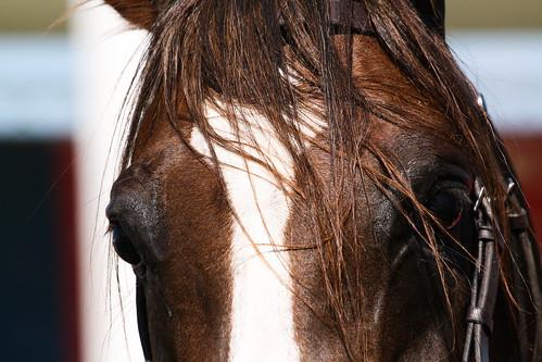 Horses Insight  (11)