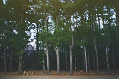 La vida secreta de los venados (Beth Nieves ,) Tags: trees oklahoma landscape woods secret inspire intothewoods deers instante adayinthelife
