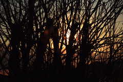 20160315_007_2 () Tags: silhouette