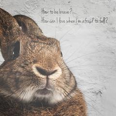 Questions (Jeric Santiago) Tags: pet rabbit bunny animal lyrics twilight conejo lapin hase kaninchen   athousandyears christinaperri winterrabbit