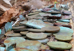 Good Fortune (McRusty) Tags: money tree scotland coins good fortune highland wish legend myth wishing
