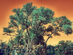 Retro (drewweinstein34) Tags: trees sky abstract color flickr explorer atmosphere greatshot sjyline