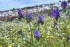 Flores lilas (vgdelmoral) Tags: naturaleza flores flower plantas natural paisaje lilas