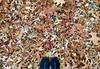 Central Park-Great Lawn, 11.07.15 (gigi_nyc) Tags: nyc newyorkcity autumn centralpark autumnleaves autumncolors greatlawn