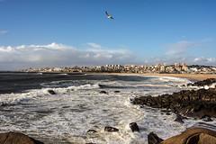 Porto - marginal martima (Francisco (PortoPortugal)) Tags: portugal porto oceanoatlntico marginalmartima franciscooliveira portografiaassociaofotogrficadoporto 0472016 20160305fpbo2519