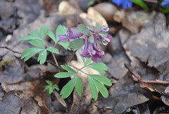 DSC_0078 (Rinswid) Tags: park nature animal spring kharkov feldman ecopark