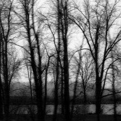 Moving Through Trees 008 (noahbw) Tags: trees sky blackandwhite bw snow storm abstract motion blur water monochrome weather silhouette misty square landscape blackwhite spring movement pond nikon natural farm branches foggy stormy icm d5000 intentionalcameramovement noahbw