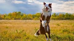 2627335-happy-dog
