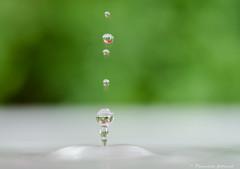 Fracheur du printemps ! (pascaleforest) Tags: macro green water spring nikon eau vert passion perle fracheur d7200 primtenps