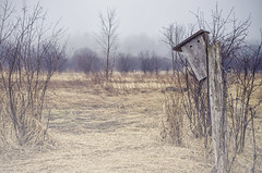 Fence Post, Bird House (flashfix) Tags: april222016 2016 2016inphotos nikon d7000 ottawa ontario canada 40mm fence field outside grass trees nature mothernature birdhouse fencepost spring raindrops landscape rural rain fencefriday flashfix flashfixphotography