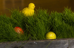 Easter Eggs 7 (rumimume) Tags: red holiday ontario canada green grass yellow canon easter photo still purple sunday sigma niagara eggs coloured picoftheday 2016 550d t2i rumimume