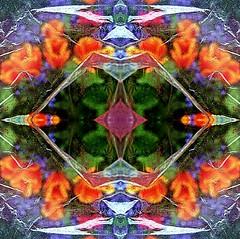 2016-04-27 symmetric orange tulips (april-mo) Tags: art experimental symmetry symmetric experimentalphoto experimentaltechnique