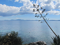 20150525_155140LC (Luc Coekaerts from Tessenderlo) Tags: sea seascape flower nature public rock landscape flora outdoor nobody greece creativecommons species corfu kerkyra seaview foreground eastcoast centuryplant vak grc agaveamericana cc0 katvolos coeluc vak201505corfu eeuwplant