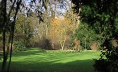Styphnolobium japonicum Golden Standard - Arboretum Kalmthout (stephenmid) Tags: belgium kalmthout