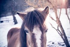 Hello horsie (sophiamaule) Tags: winter horse sun russ hst