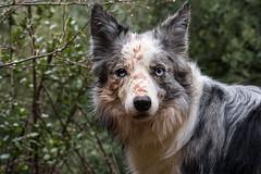 Wild dog (lex.Garcia) Tags: nature stain animals wilddog wildness tagamanent