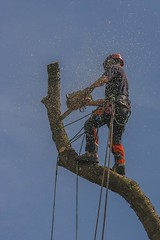 Tree surgeon at work. (foto.pro) Tags: tree work cherry saw down safety chain cutting