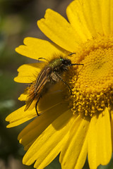 IMG_6087 (petrosli) Tags: plants macro nature closeup canon eos eos500d